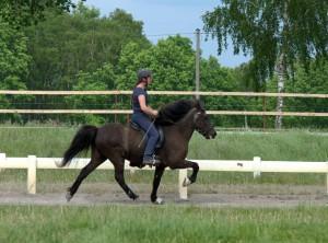 pferd training sommer