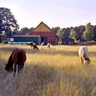 HofPferde